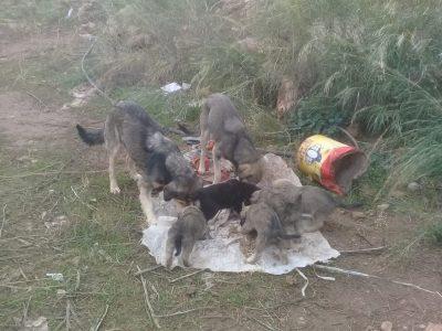 Herzensangelegenheit e.V. unterstützt die Tierhilfe Antalya e.V.